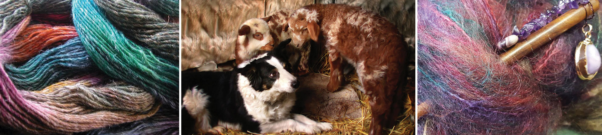 Herding Dog with Lambs and Wool